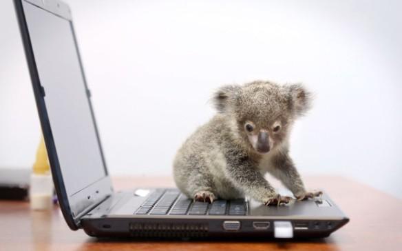koala-laptop_2388626k