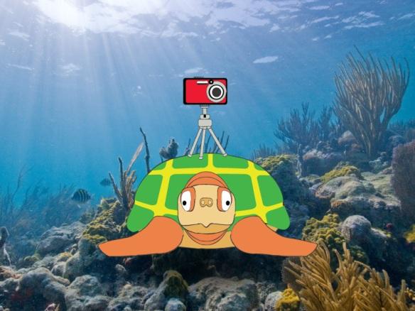 world-turtle-day